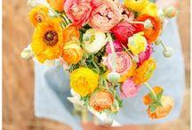 Flowers - Yellow (Flori - Galben)