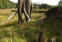 Early Elephants