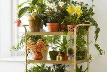 Gardening | Indoor