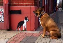 pups / by Sarah Engelhardt