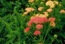 Garden definites