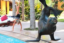 Priceless Moments in Paradise / Share a moment or two with us and be inspired. Play with a sea lion, climb a tree, poke a fire, dance to the Mariachi - remember this forever.