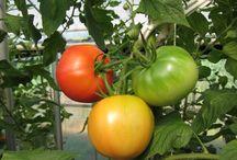 Local Food / 色々な産地のいろいろな素材を。