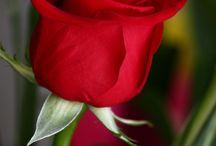 fiori splendidi