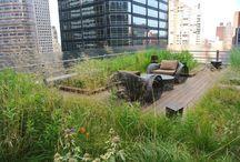 Biophilic Roof Gardens