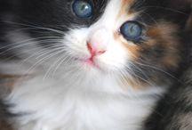 Cats, Cats, Cats / by Debby Van Sant