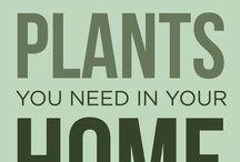 plant ideas for apartment