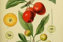 vegetables, fruits and other vegetation