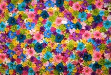 a virag boldogsag / a viragok boldogsagot adnak az embernek