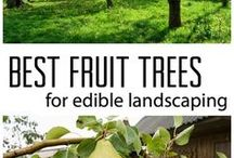 Growing Fruit Trees / All the benefits, tips & tricks, expert inside info, and reasons to plant your own fruit tree orchard at home. Whether you garden on a patio or enjoy acres, there is a way for everyone to enjoy homegrown fruit.