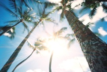 Palms / by Tamara Ellenbecker