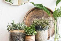 plants pots