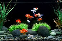 Gold Fish Tank Ideas