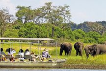 Chobe Day Trip / Chobe National Park is well known for its large herds of elephant that frequent the Chobe River on a daily basis. In the dry season, an estimate of up to 85,000 elephants can be dispersed within the Chobe National Park, where the majority of them can be found along the river. Apart from the herds of elephants, Chobe also has lots more to offer. The Park has lion, leopard, buffalo and a whole host of antelope.
