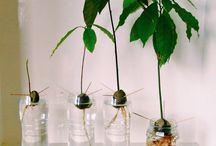 Gröna Växter Inomhus