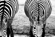 African Wildlife Photography / Awesome shots of wildlife taken while travelling or on safari