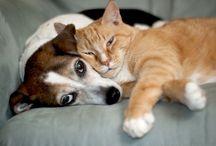 Pisici și câini/Cats&Dogs