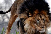 leiona