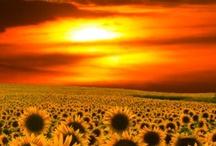 Golden Sun  / Beautiful