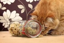 Food for cats/dogs