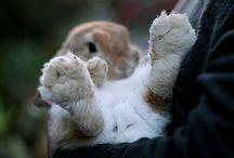 süße Tierbilder/Videos / Mehr süße Bilder und Videos gibt es auf meinem eigenen Youtubekanal sowie meinem Blog, seht dort doch auch mal rein (^.^)   Mein Youtubekanal: https://www.youtube.com/user/kaninchenfanlucky  Mein Blog: http://kaninchenfanlucky-meinkaninchenloch.blogspot.de/   #animal #animals   #bunny   #cat   #cats   #hase   #haustier   #haustiere   #kaninchen   #karnickel   #katze   #katzen   #katzinchen   #mieze   #pet   #pets   #usagi   #zwergkaninchen