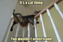 Cats on Things