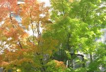 Autumn Leaves / Beautiful pictures of autumn leaves around campus