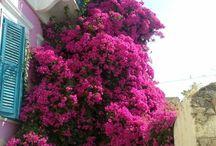 Balcony Gardens / a look at elegant cascading gardens