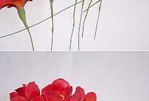 Цветы ФОМ