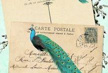 Peacock fancy