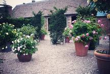 Garden } Roses / Rose Garden