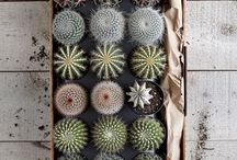 For the love of Cacti and Succulentss