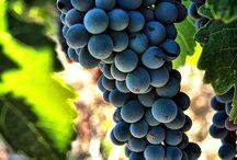 Grapes / grape