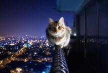 Cats / by Eveline Deinum