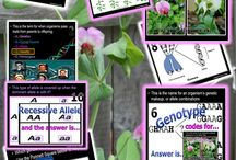 DNA and Genetics Unit / Teach a fantastic unit about DNA and Genetics, Cell Division (Mitosis) and Meiosis, Bio-Ethics and more at..   https://www.teacherspayteachers.com/Product/DNA-and-Genetics-Unit-110347