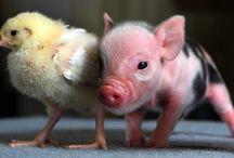 Cutest Pets / by Jasmine Nola