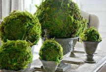 Moss balls diy