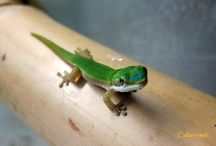 Gecko and Lizards Juveniles / Just some little geckos from my collection :)