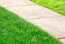 Grass, Sod, & Turf / Learn the best practices for growing and caring for your grass, sod, and turf here. Extend the life of your lawn!