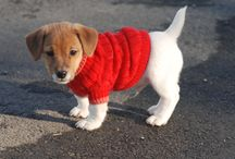 Dogs in Sweaters! And a few cute exceptions / Because dogs in sweaters