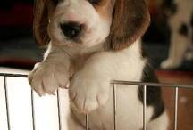 Panier Chien Beagle