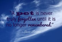 Quotes: Loss of Pet / Popular quotes on the loss of a pet by famous authors, celebrities, and newsmakers. Pin a quote that provides you with comfort or inspiration in your time of need.