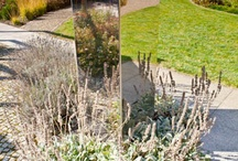Gardens in Poland / This is gallery of my photos from Polish gardens