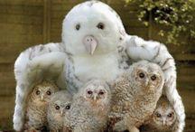Fluffy Birds / by Jeanne Hening