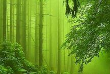 erdők  mezök