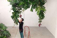 design vegetal