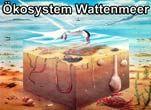Projekt Wattenmeer