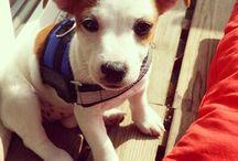 DoggyAdele / https://instagram.com/doggyadele/ Follow me Woof Woof <3