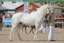 Lipizzan / country of origin - Slovenia and Austria | average height 147-157 cm | colours - predominantly grey, black, bay/brown | uses - dressage, driving, show horse