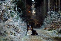 Animals - Kristin Kaiser Fotografie